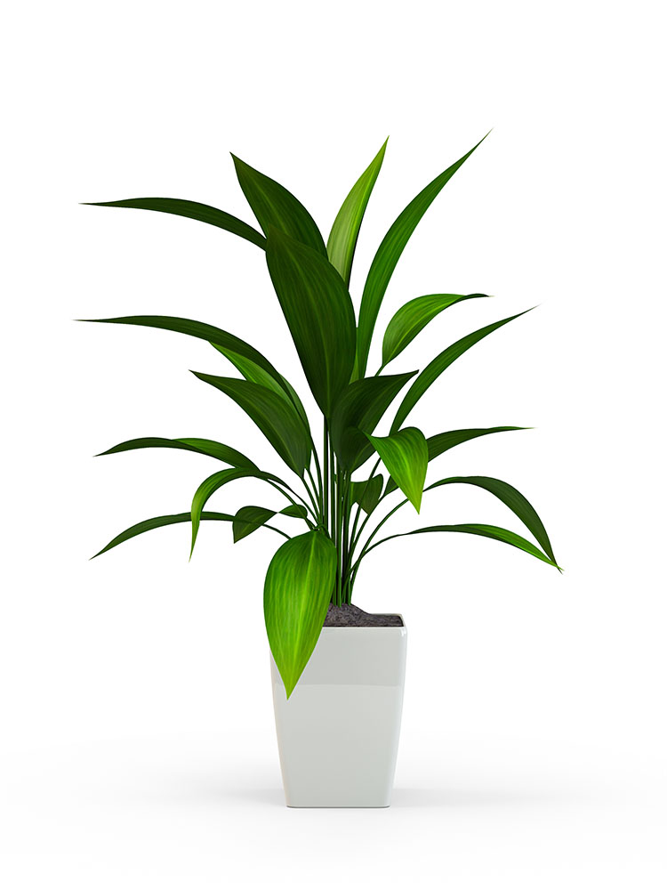 Green potted plant isolated on white background. 3D Rendering, 3
